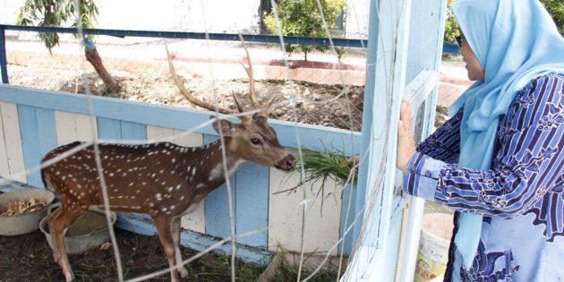 Usir Kejenuhan dan Kebosanan Belajar, SMAN 2 Brebes Buat Kebun Binatang