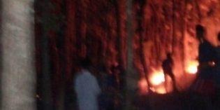 Diduga Berasal dari Api Puntung Rokok, Alas Jati di Bantarkawaung Terbakar