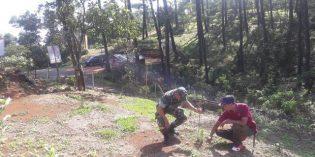 Cegah Bencana Susulan, Ribuan Pine Tree Ditanam Disekitar Bencana Longsor Salem
