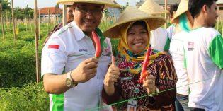 Produksi Cabe Menurun, Brebes Kembangkan Sistem Budidaya Cocopeat